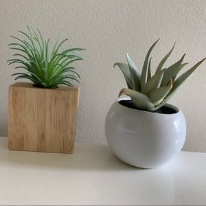 Set of Two Faux Succulents
